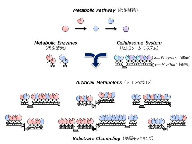 代謝酵素複合体のタンパク質工学...